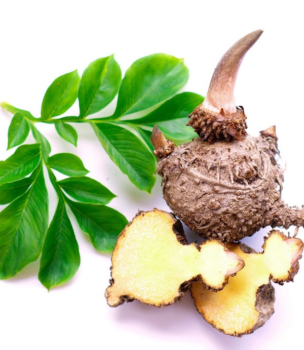 sofitel quiberon konjac diététique