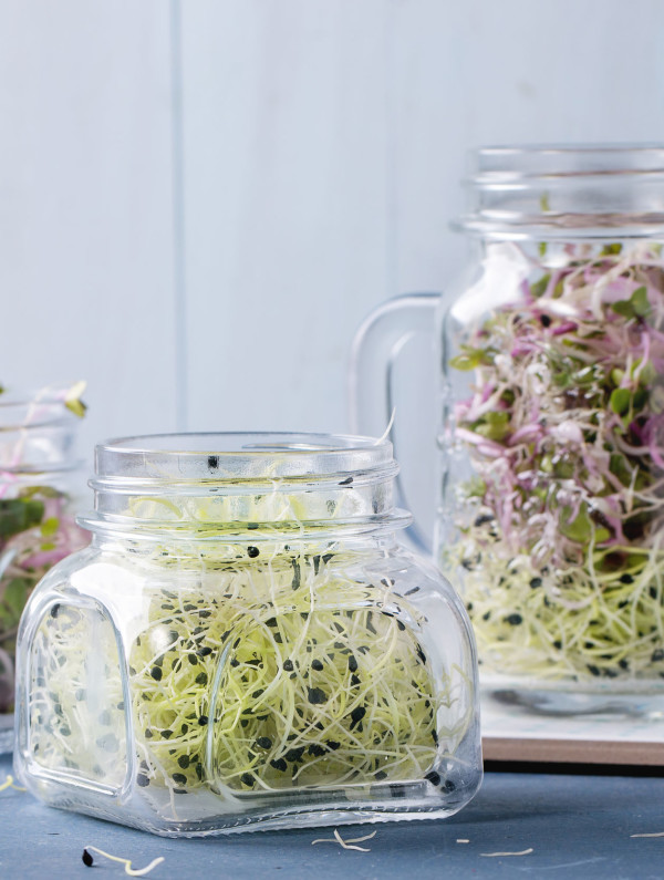 Garlic and Radish Sprouts